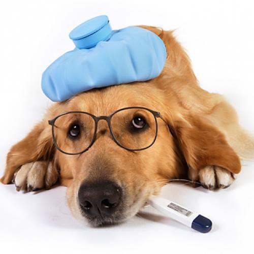 ДЭНАС в лечении животных