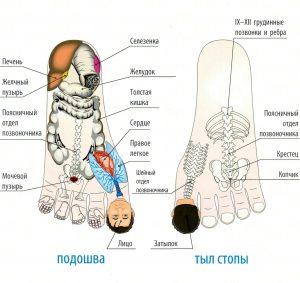 Су - джок стопы
